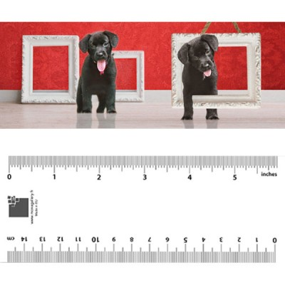 Black Puppies Bookmark